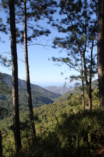 View through the forests towards Cuba's south coast
